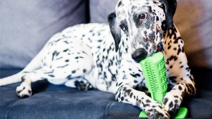 Bristly: World's Most Effective Dog Toothbrush