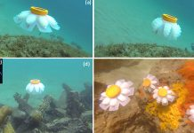 Robot Jellyfish: Savior to the world's coral reefs