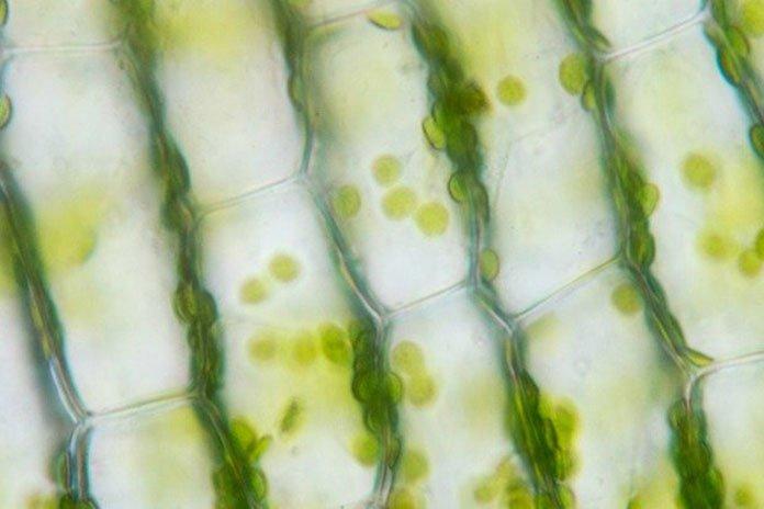 Human hair in Microscopic Camera (Sinhyu/iStock)