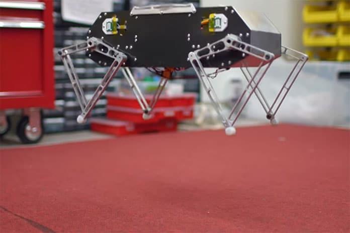 It can jump as high as 3.5 feet in the air.