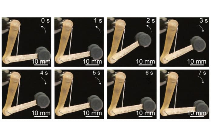 The fibers developed by the MIT team can lift 650 times their own weight, and might be used to control robotic or prosthetic limbs./ Image: MIT