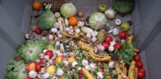 Trashed vegetables