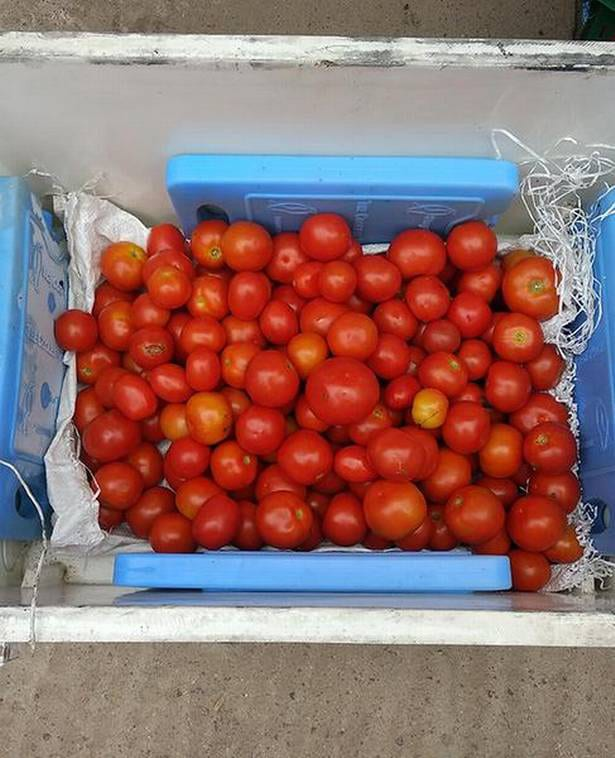 Tan90, a portable, low-cost food storage device for farm produce