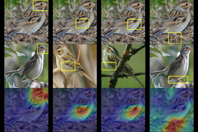 A Duke team trained a computer to identify up to 200 species of birds from just a photo.