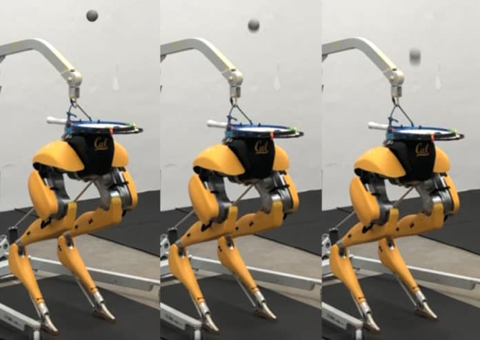Two-legged Cassie Cal robot can juggle a ball on its head