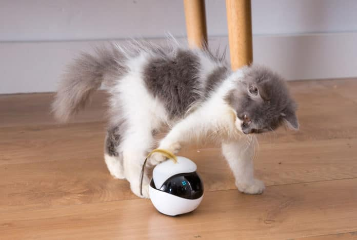Ebo, The Smart Robot Companion for Your Cat