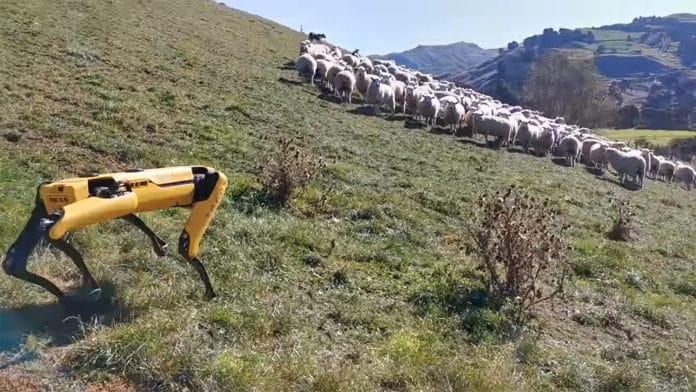 Boston Dynamics robot dog becomes Shepherd in New Zealand