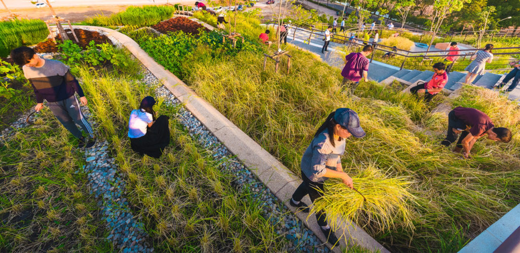 TURF provides up to 20 tons (80,000 meals) of organic food each year.