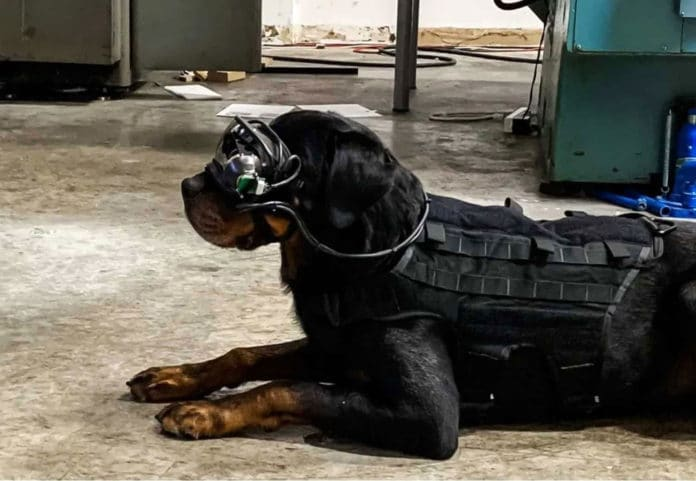 Military dogs with AR glasses allow human companions to effectively command them at a safe distance.