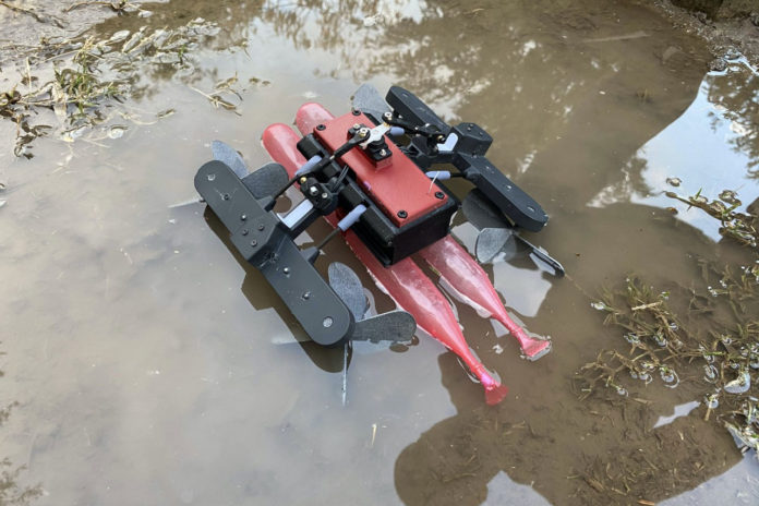 Lizard-inspired, high-speed AmphiSTAR robot crawls and runs across water. Credit: Ben-Gurion University of the Negev