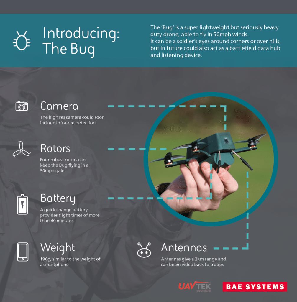 Bug infographic