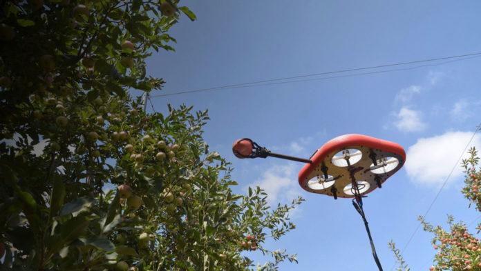 Flying autonomous robot (FAR) can spot and pick ripe fruit.
