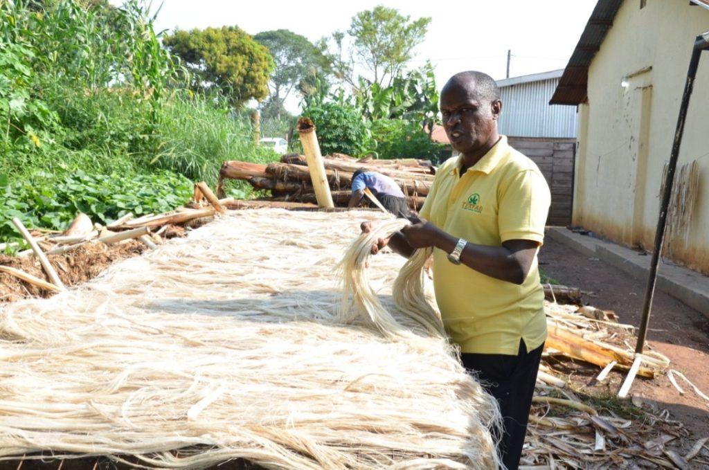Ugandan startup transforms banana waste into textiles, carpets.