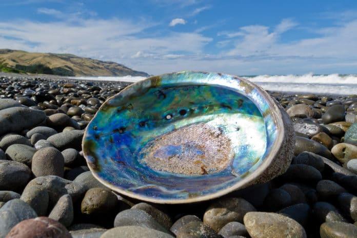 Shiny nacre of Abalone washed ashore.