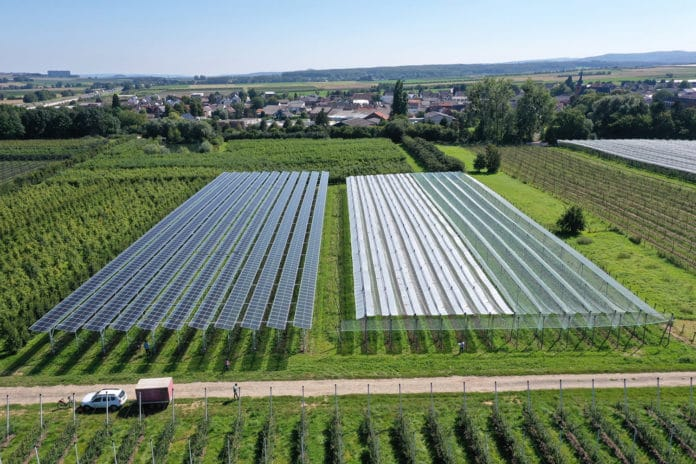 """In the project """"Agri-PV Obstbau"""", a variety of solar module technologies (left) and conventional crop protection systems (right) are being tested."""