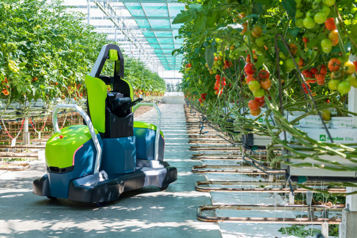 Priva's fully automated leaf-cutting robot for tomato can operate 24/7.